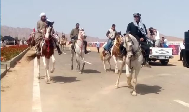 مهرجان سباق شرم الشيخ للهجن