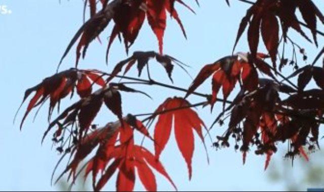 حدائق يابانية مسحورة