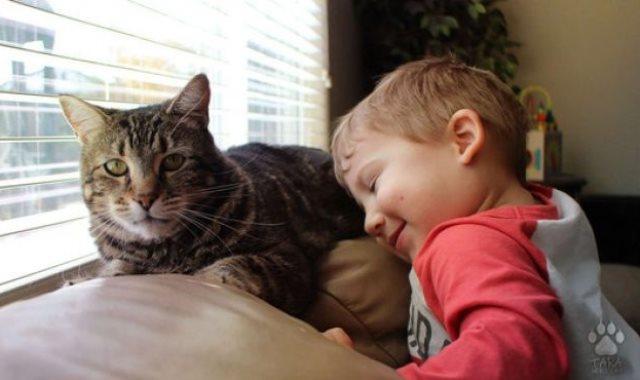 طفل يحمل قطة