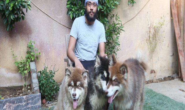 الكلب الاسكا
