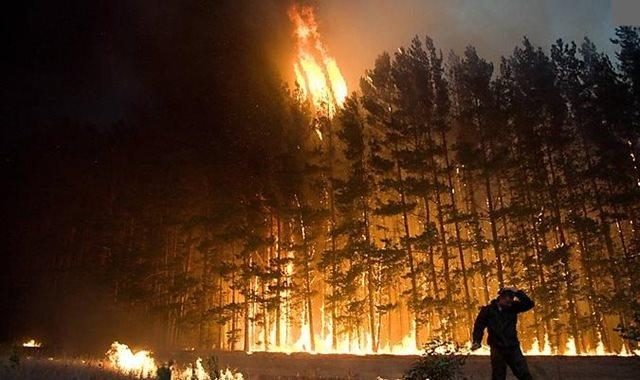 حرائق الغابات - أرشيفية