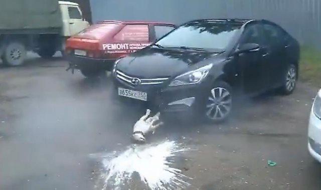 سقوط الكلب بعد انفجار الزجاجة