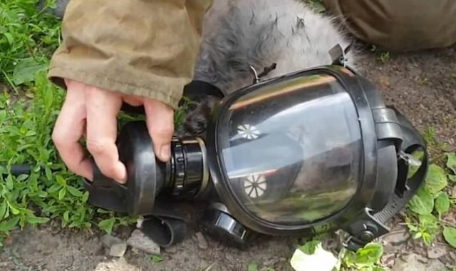 القط داخل قناع الأكسجين