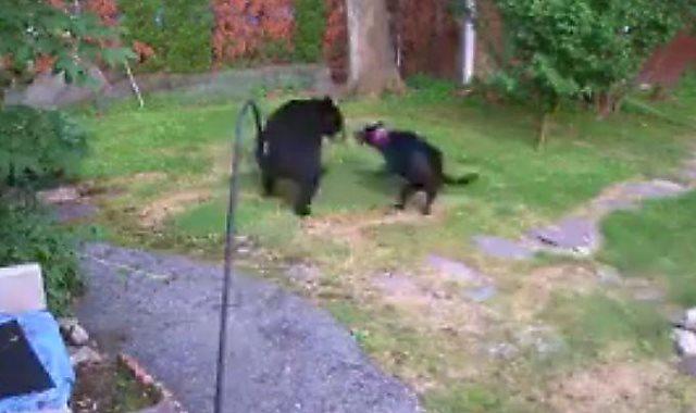جانب من مواجهة الكلب والدب