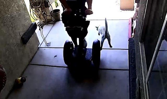 القط يهاجم الرجل
