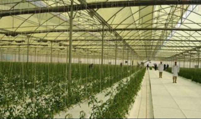 شعبة الخضروات تتوقع هبوط الأسعار 20% بسبب الصوب الزراعية