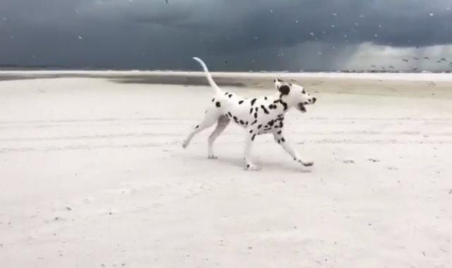 الكلب يطارد الطيور