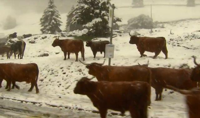 تساقط الثلوج على جبال الألب