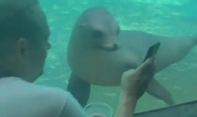 اسد البحر