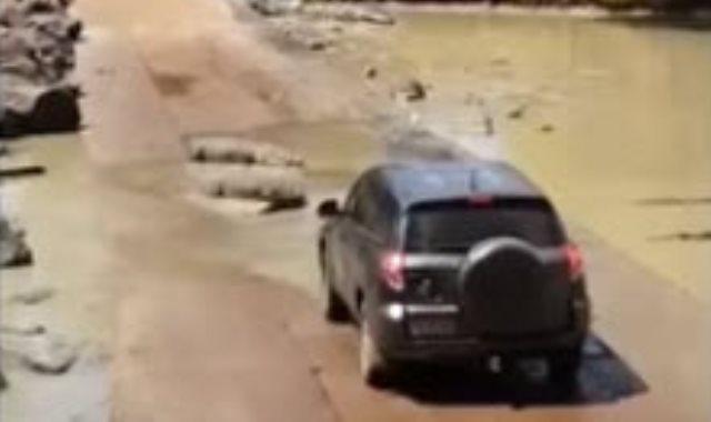 التماسيح تمنع السيارة من المرور