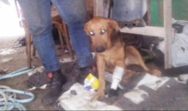 صاحب ورشة خراطة بدمياط يصنع قدما صناعية لكلب