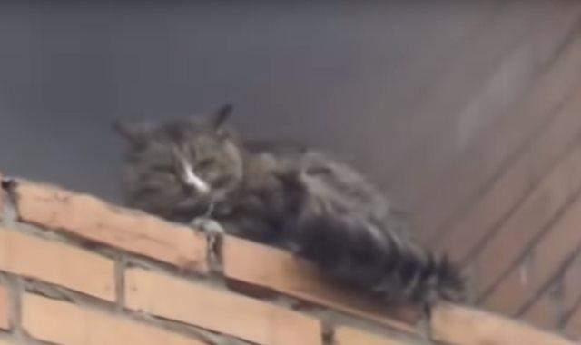 القط العالق في الحريق