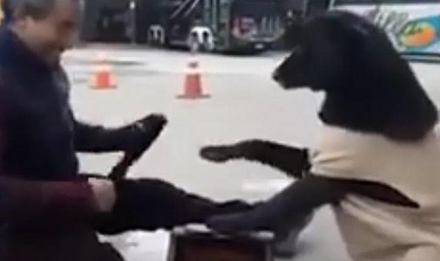 كلب يطلب مسح حذاءه كالبشر