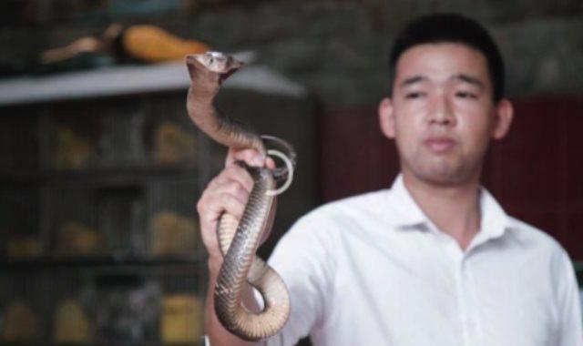 إعلان لمطعم يقدم الثعابين