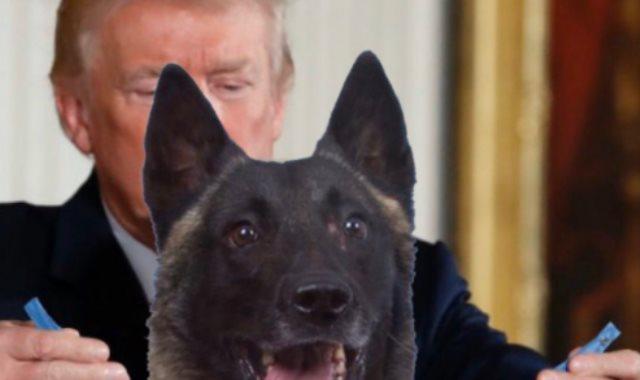ترامب يكرم الكلب البطل