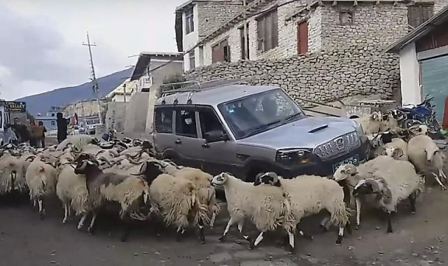 الخراف