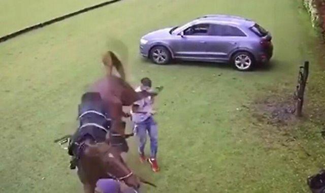 حصان يضرب