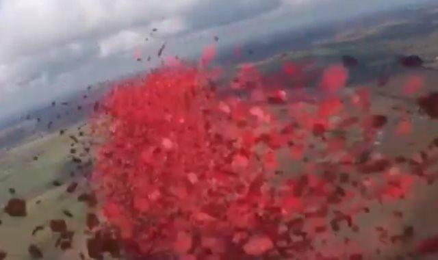 أوراق زهور الخشخاش فى سماء لندن