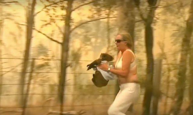 سيدة تخاطر بحياتها لإنقاذ حيوان كوالا من حرائق الغابات بأستراليا