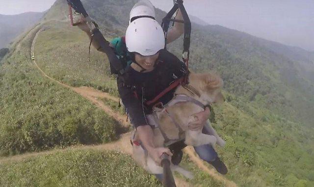 الكلب مع أصدقائه