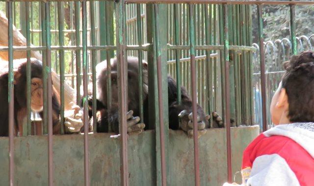 حديقة الحيوانات فى أول أيام ثلاثاء الـ65 جنيها