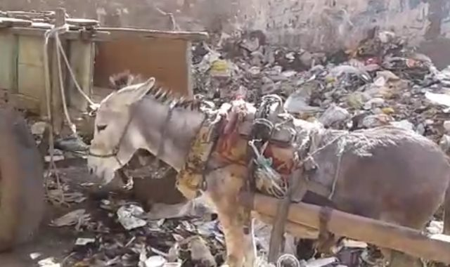 القمامة تحاصر مناطق التأمين الصحى والمدرسة الفندقية بالمنوفية