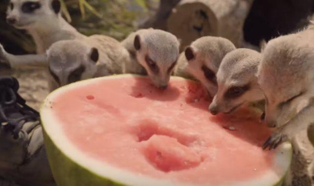 حديقة حيوان استراليا