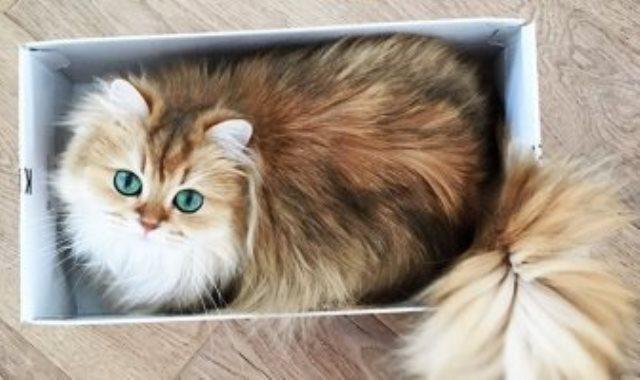 قطة - أرشيفية