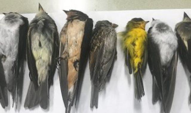 نفوق الطيور في ولاية نيومكسيكو الأمريكية