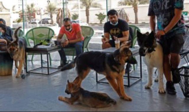 مقهى الكلاب
