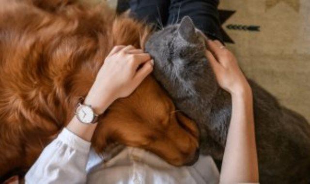 الاهتمام بالحيوانات الأليفة ـ صورة أرشيفية