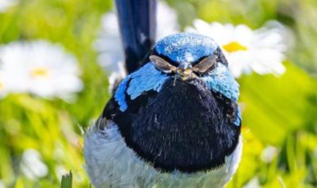 طائر يبدو مرتديا نظارة شمسية