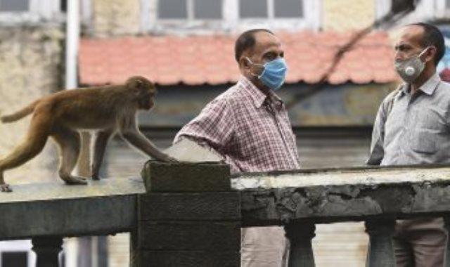 القردة في الشارع