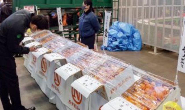 مزاد لبيع برتقال الماندرين