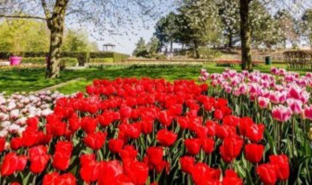 حديقة كوكنهوف