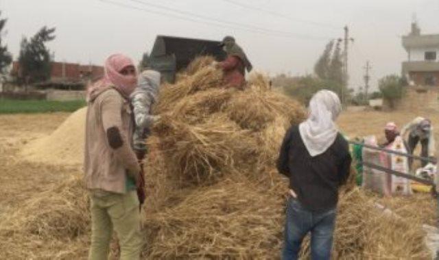 حصاد القمح - أرشيفية