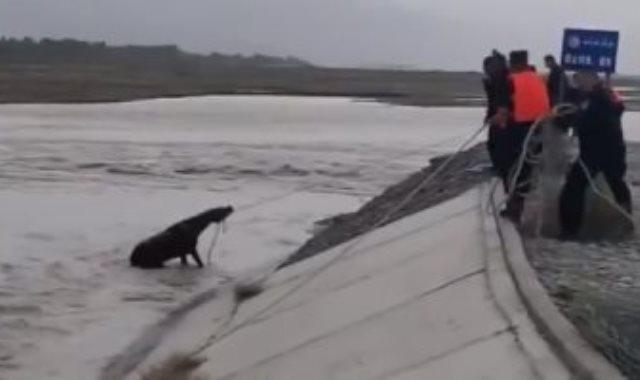 محاولة انقاذ الحصان
