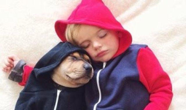 النوم برفقة الحيوان الأليف