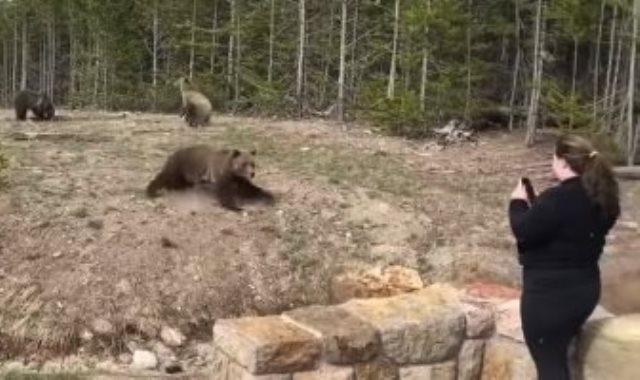 اقتراب السيدة من الدب