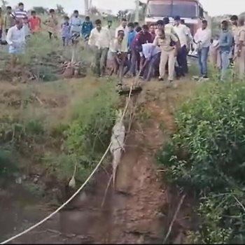 انقاذ تمساح