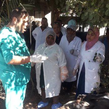 قوافل بيطرية لعلاج الماشية بالمجان فى أسوان