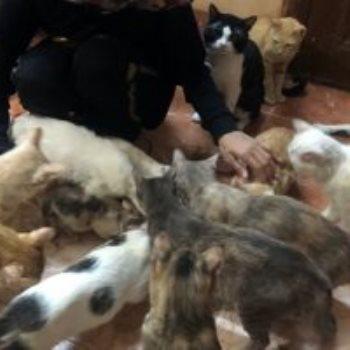 مروة مجدي مع القطط
