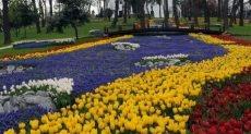 زهور ارشيف