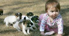 كلاب - صورة أرشيفية