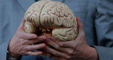 مجسم لمخ الإنسان