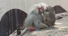 حقوق الحيوان ، تعذيب الحيوانات , وفاء الكلب، تعذيب كلب موضوعات متعلقة
