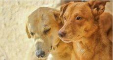 كلاب - أرشيفية