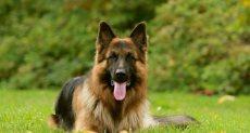 جامعة كلاركسون الأمريكية تمنح كلبا دبلوما فخريا
