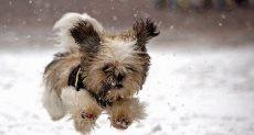 كلب صغير