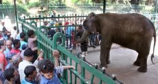 الفيلة نعيمة أمام رواد حديقة الحيوان - أرشيفية